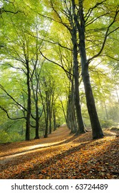 Beautiful sunlight in the autumn  forest.