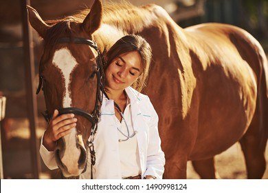 Beautiful sunlight. Female vet examining horse outdoors at the farm at daytime.