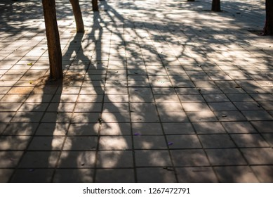 The beautiful sunlight in the morning, the shadows of the trees and the leaves that led to the brick flooring in the park