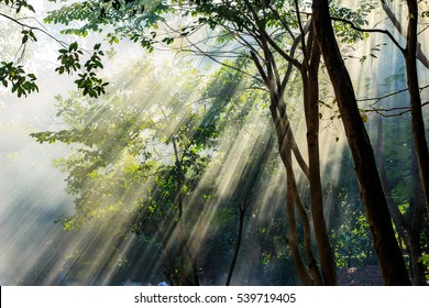 Beautiful sunlight rays pass through the trees and smoke, in the morning of winter