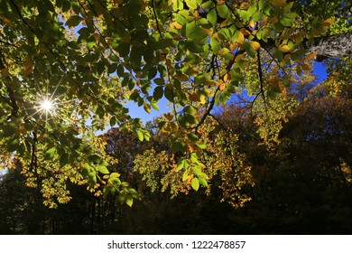 Beautiful sunny autumn day. The sun shines through the green and yellow leaves of the tree