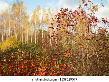 Beautiful sunny autumn landscape in rural area