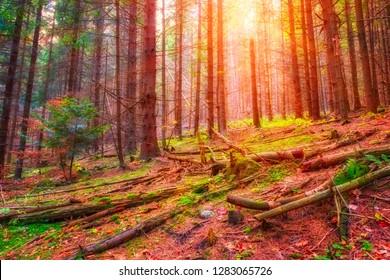 Beautiful sunny color pine forest, wild nature, outdoor travel background, National park Slovak paradise (Narodny park Slovensky Raj), Slovakia (Slovensko) - Shutterstock ID 1283065726