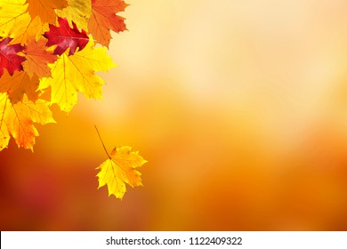 Beautiful sunny colorful fall season leaves on blurry bokeh copy space background. Selective focus used.