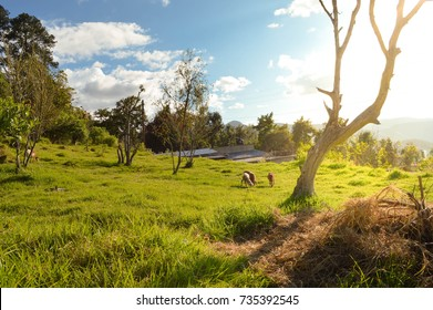 Beautiful sunny landscape with the sheep grazing in Capulalpam de Mendez in the highlands of Oaxaca, Mexico. It is one of the Pueblos Magicos towns.