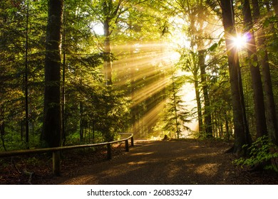 Beautiful Sunny Morning in the Forest with Sunbeams shining through the branches