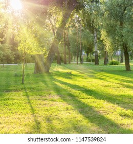 Beautiful sunny park with light beams at green grass