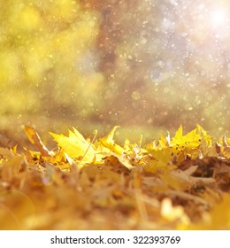 Beautiful sunny and rainy yellow color autumn season leaves with sunlight flare background.