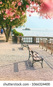 Beautiful sunny summer view of benches in Bellagio town at lake Como in Italy with blooming nerium oleander flowers and ships