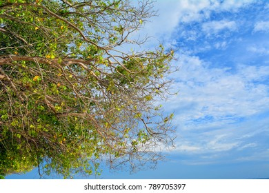Beautiful sunny tree against the blue cloudy sky
