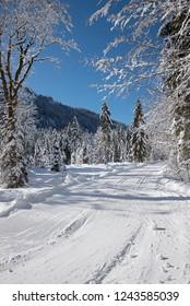 beautiful sunny winter landscape with cross-country ski tracks near kreuth, bavaria