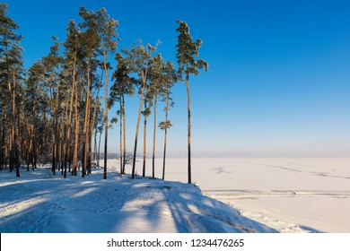 Beautiful sunny winter landscape with pine forest and iced lake. Cold winter and wild nature.