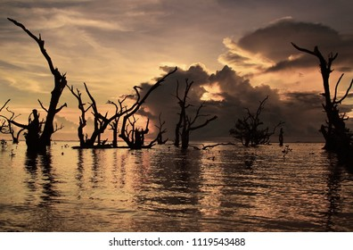 Beautiful Sunrise at the Beach, Mangroves in the Seawater, beautiful morning sky, perfect for canvass print.