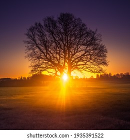 A beautiful sunrise behind the large oak trees in spring. Bare tree silhouette with sun shining through. Springtime scenery of Northern Europe.