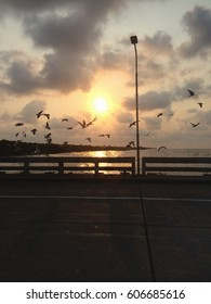 Beautiful sunrise and flying birds over the sea surface