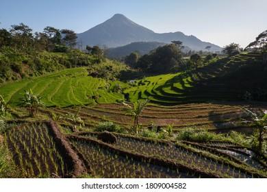 beautiful sunrise and green rice terraces in Selotapak Trawas, Mojokerto - East Java Indonesia - Shutterstock ID 1809004582