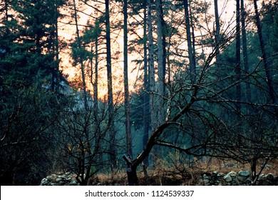 Beautiful sunrise in Jangle, Kasol