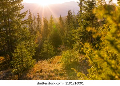 Beautiful sunrise landscape in the forest in Carpathian mountains, Ukraine.