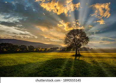 beautiful sunrise landscape.green valley and lonely tree