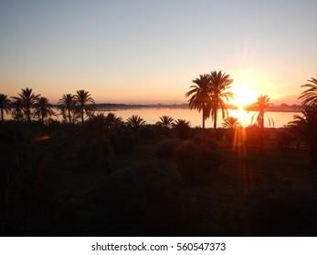 beautiful sunrise at larnaka salt lake with palm trees