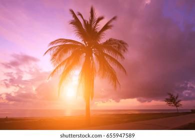 Beautiful sunrise on the sea and coconut tree