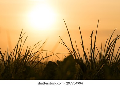 Beautiful sunrise over a blades of grass. Hot summer morning.