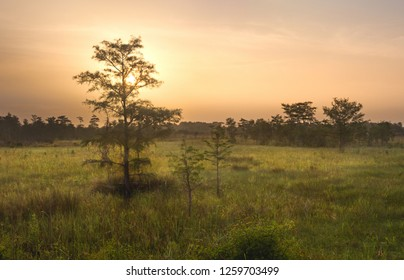 A beautiful sunrise over the Everglades wetlands in South Florida