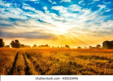 Beautiful sunrise over field