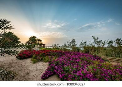 Beautiful sunrise over flowery park on Sir Bani Yas Island