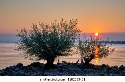Beautiful sunrise over small trees