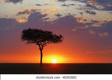 Beautiful sunrise over the vast Serengeti plains in the Masai Mara National Reserve, Kenya.