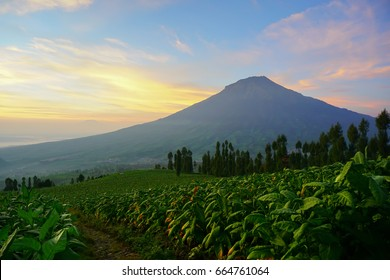 Beautiful sunrise in Posong, Temanggung, Central Java, Indonesia (Sunrise di lembah Posong, Jawa Tengah, Indonesia)