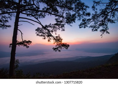 Beautiful sunrise purple sky on top view hill mountain cliff and branch silhouette pine tree landscape with fog mist background