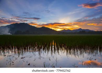 beautiful sunrise at rice field