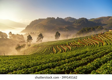 Beautiful sunrise scene at strawberry field terrace at doi angkang , chiang mai , Thailand.