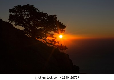 Beautiful sunrise. Silhouette of mountain and pine against the backdrop of the bright sun rising above the sea