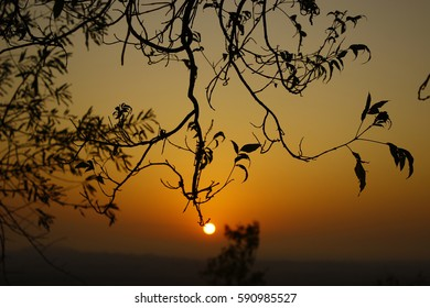 Beautiful Sunrise with Tree & Leaves