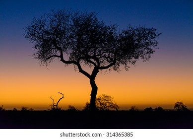 Beautiful sunrise tree silhouette, Kruger National Park, South Africa, 2015