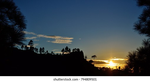 Beautiful sunset among pine trees, Pilancones, mountains of Gran canaria, Canary islands