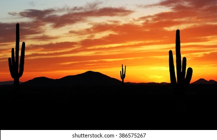 Beautiful sunset in the Arizona desert with Silhouette of Cactus and palm trees off in the distance