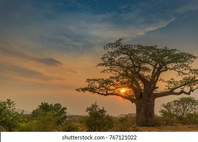 Beautiful sunset with baobab. Lubango. Angola.