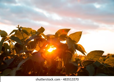 Beautiful sunset behind the green plants. The sun goes below the horizon