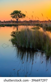 A beautiful sunset in Botswana over the water of the Okavango Delta. Reeds with their reflections in the water and a tree in the background. Orange flame burst sunset.