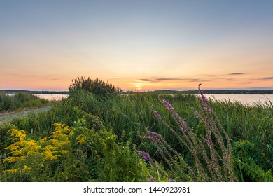 Beautiful sunset by the lake, green flowers and color sky - Shutterstock ID 1440923981