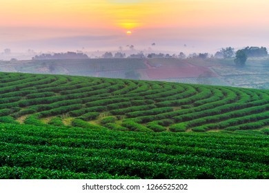 A beautiful sunset at Chui Fong tea plantation, Chiang Rai, Thailand