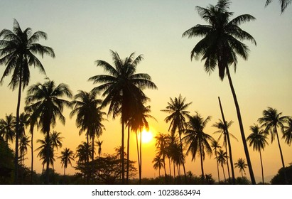 Beautiful Sunset in the evening on the coconut tree