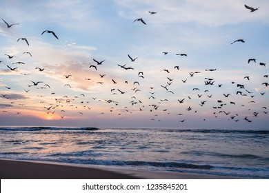 Beautiful sunset with flock of seagulls flying over the sea, California