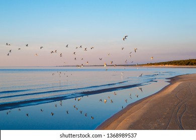 Beautiful sunset with flock of seagulls flying over the sea in Jurmala, Latvia