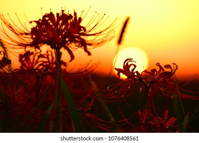 Beautiful Sunset with flowers