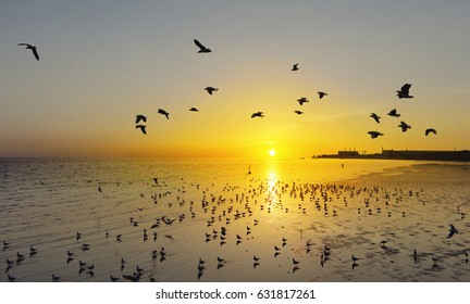Beautiful sunset and flying birds over the sea surface
